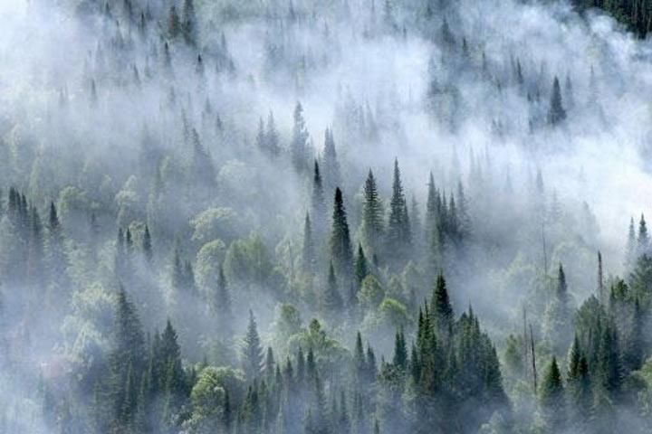 Спасите нашу тайгу: Сибирь на пороге «великой экологической катастрофы»