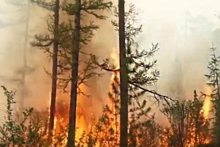 Леонардо Ди Каприо обратил внимание на природные пожары в Сибири