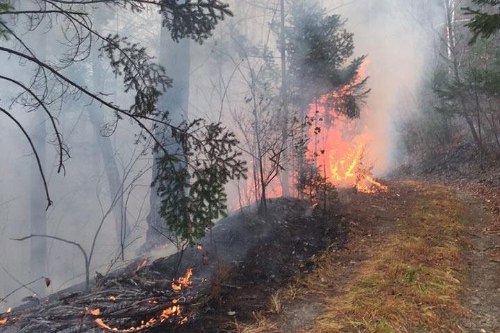 Иван Серебряков: Не тушить лесной пожар - это верх цинизма!