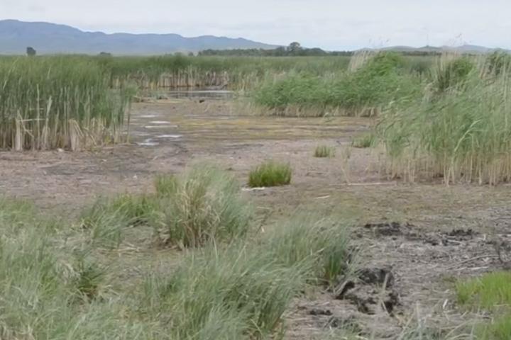 Знаменский пруд в Хакасии — очистка или уничтожение
