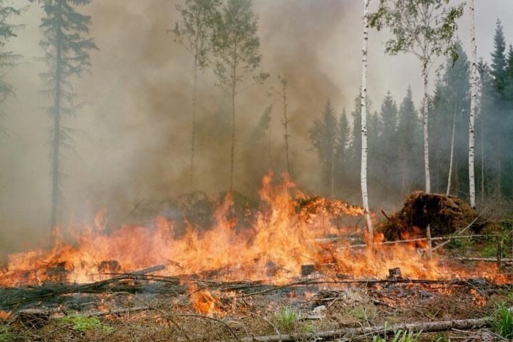 Почему нет людей тушить пожары - потому что они все заняты в Росгвардии