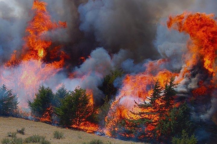 Площадь природных пожаров за сутки увеличилась на 6,5 тыс. гектаров