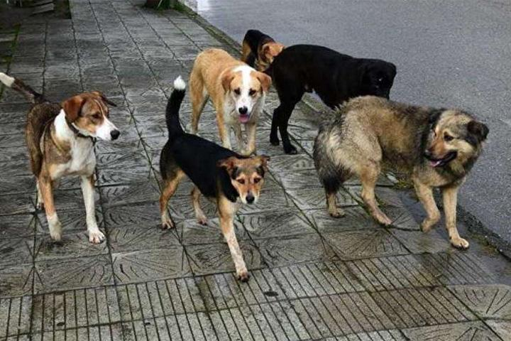 Саяногорск нашел нового-старого предпринимателя на отлов бездомных собак