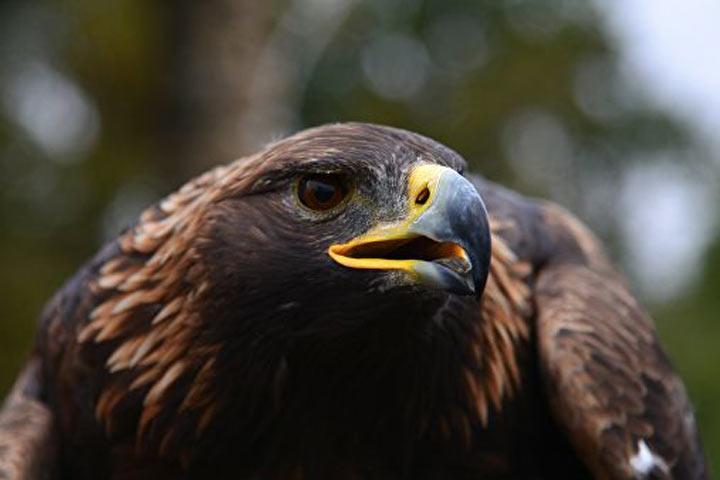 Смог по соседству с Хакасией стал одной из причин массовой гибели птиц