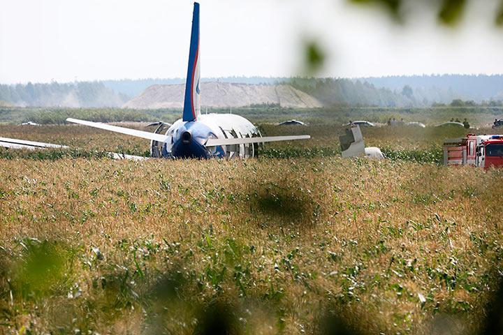 Минприроды потребовало проверить свалки около Жуковского после ЧП с самолетом из-за птиц