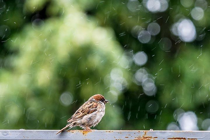 Погода в Хакасии 12 августа