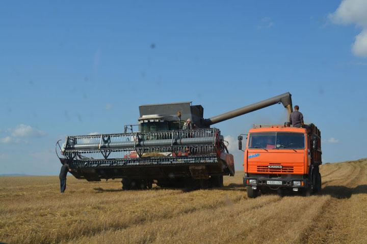 В Боградском и Бейском районах начали убирать пшеницу