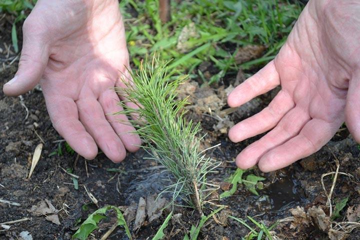 Глава Хакасии поздравил работников леса с профессиональным праздником