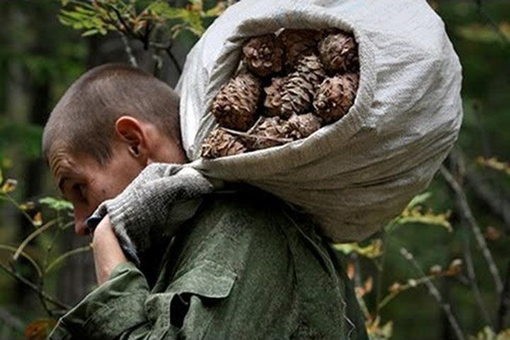 Низкую явку связывают с «небывалым урожаем шишек»