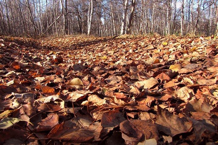 Погода в Хакасии 7 октября