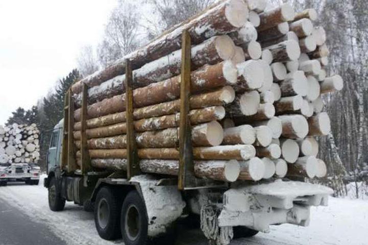 Осуждена ОПГ по вывозу леса из Хакасии и Красноярского края