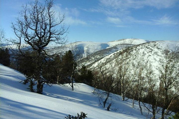 В Приисковом погиб снегоходчик