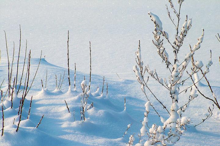 Прогноз погоды в Хакасии 24 ноября